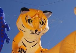 Kirra kite festival 2012