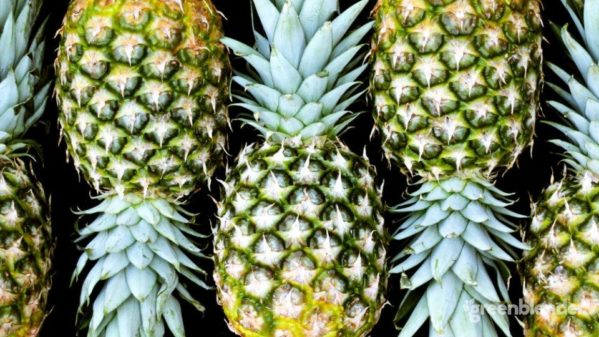 pineapple smoothies 960x540 599x337 - Foods That Assist with Sporting Injuries and Reducing Inflammation