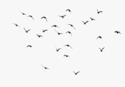 50 507278 birds flying transparent background hd png download 251x175 - releasing negativity