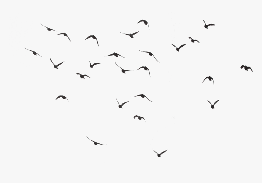 50 507278 birds flying transparent background hd png download - Helpful Tips to Dilute Negativity of the Mind