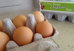 Eggs are back on the menu- what's the best to buy?