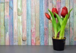 spring eating habits
