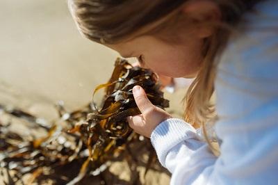 seaweed supplement